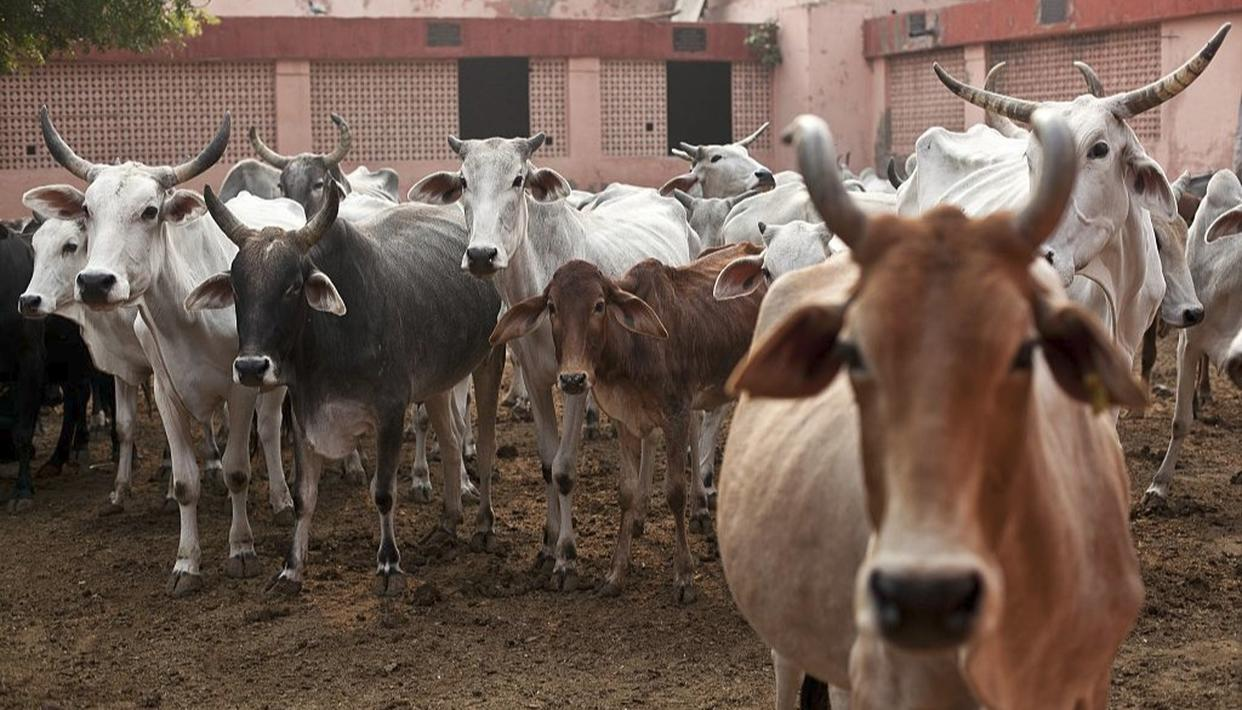 NOTICE TO CENTRE OVER CATTLE GUIDELINES