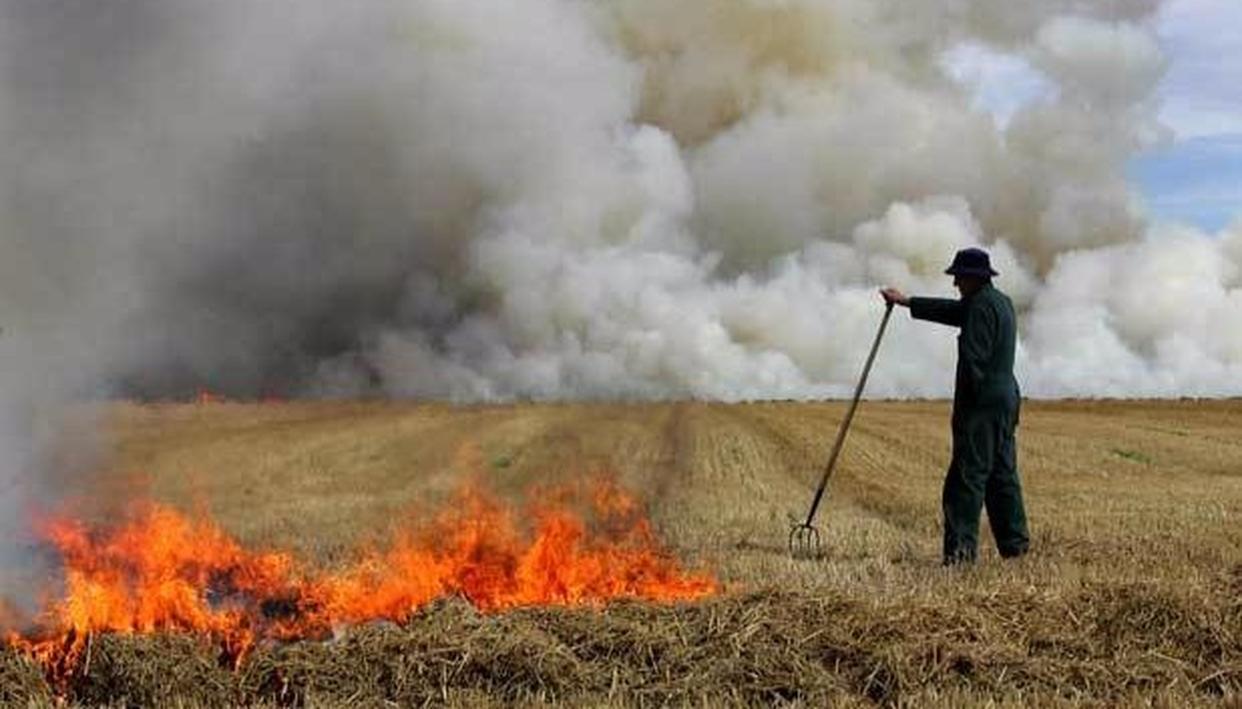 Delhi HC targets Stubble burning