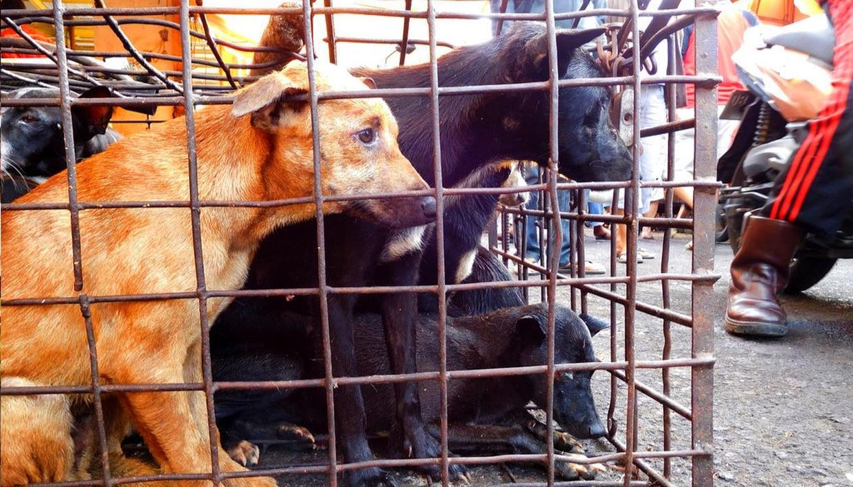 INDONESIA'S BRUTAL DOG MARKETS