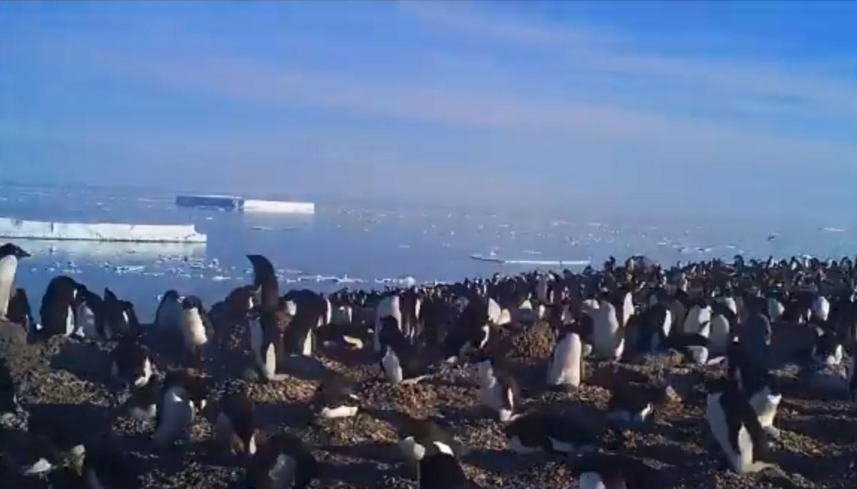 PENGUIN SUPERCOLONY DISCOVERED!
