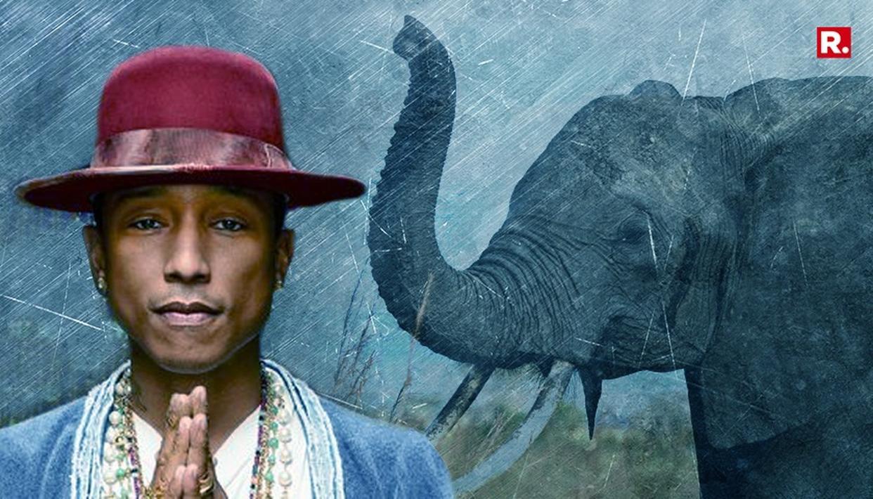 """HAPPY SINGER"" VISIT ELEPHANT CONSERVATION"