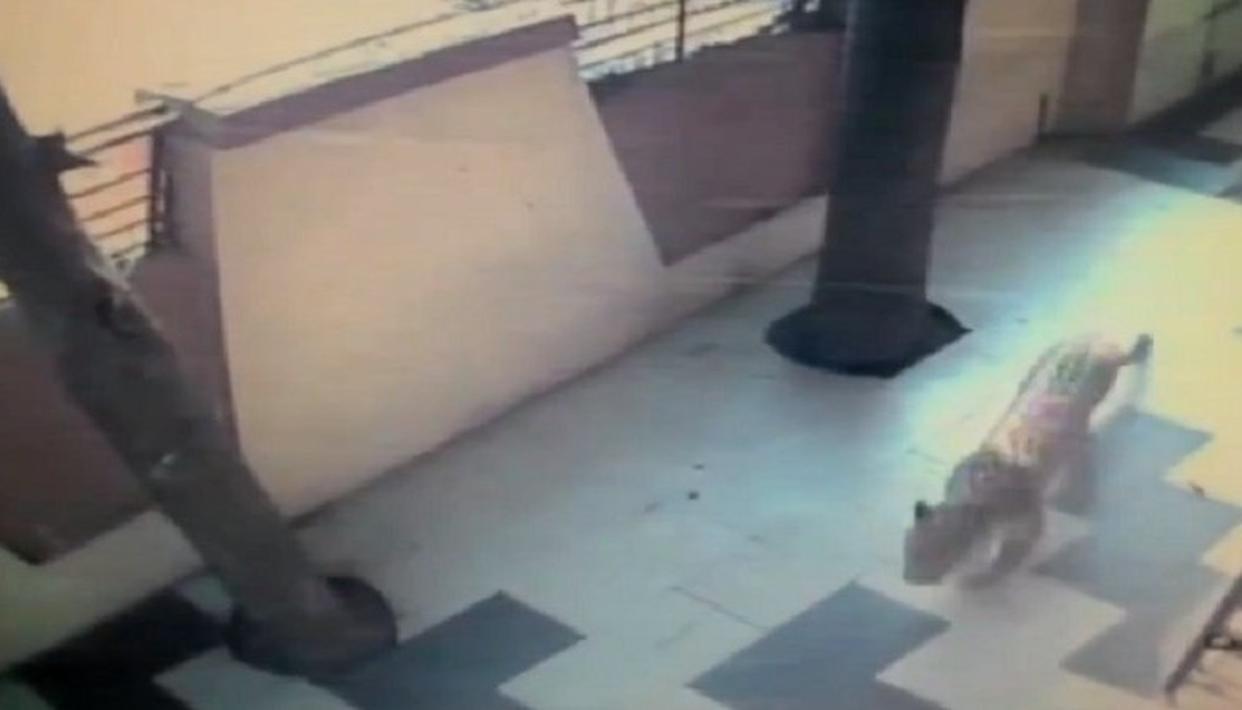 WATCH: THANE LEOPARD ON CCTV