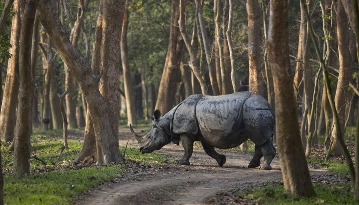 SANCTUARY SEES INCREASE IN NO. OF RHINOS