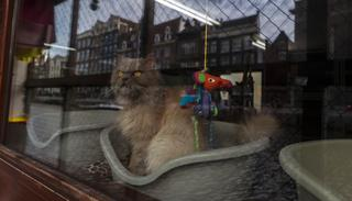Kasumi, a 9-year-old-cat looks out the window of the boat at the Catboat shelter in Amsterdam, Netherlands.