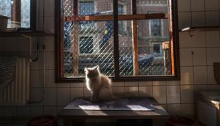 Kasumi, a 9-year-old cat sits in a spot of light at the Catboat shelter in Amsterdam, Netherlands.