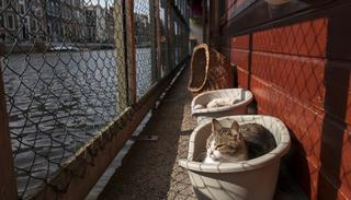 Borre, an 8-year-old cat sits in a basket next to the canal on the Catboat shelter in Amsterdam, Netherlands.