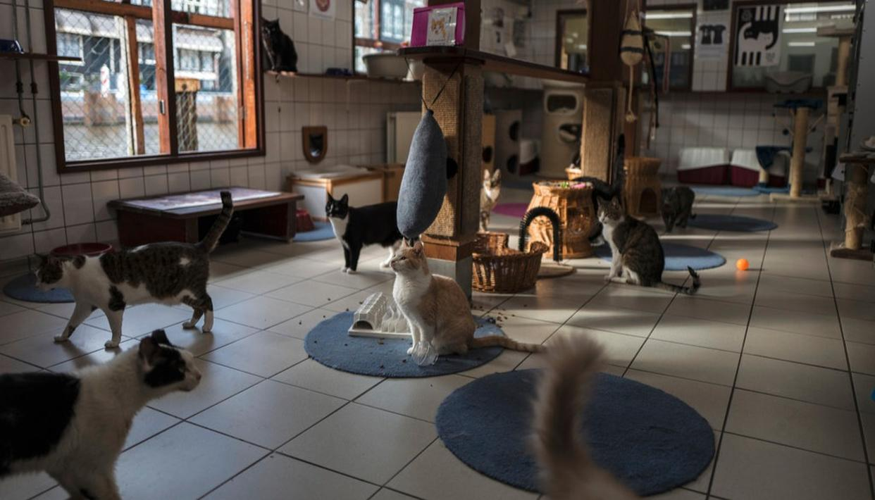 Cats gather for food on the Catboat shelter in Amsterdam, Netherlands.