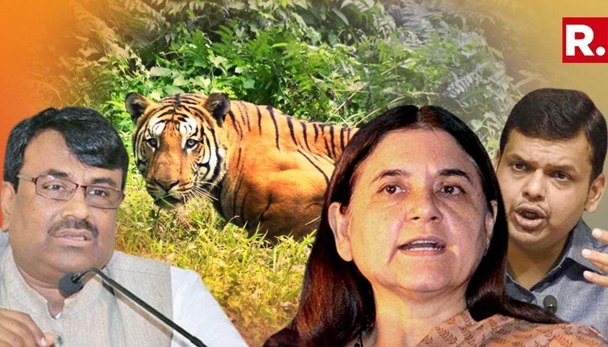 c63cfacfe8f Maharashtra Government Will Conduct An  in-dept  Probe Into Killing Of Tigress  Avni