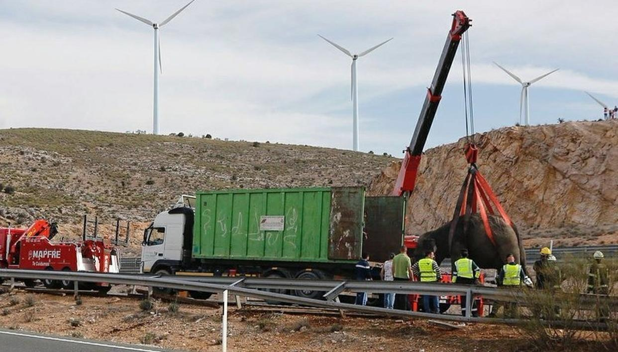 ELEPHANT KILLED IN SPANISH CIRCUS TRUCK CRASH