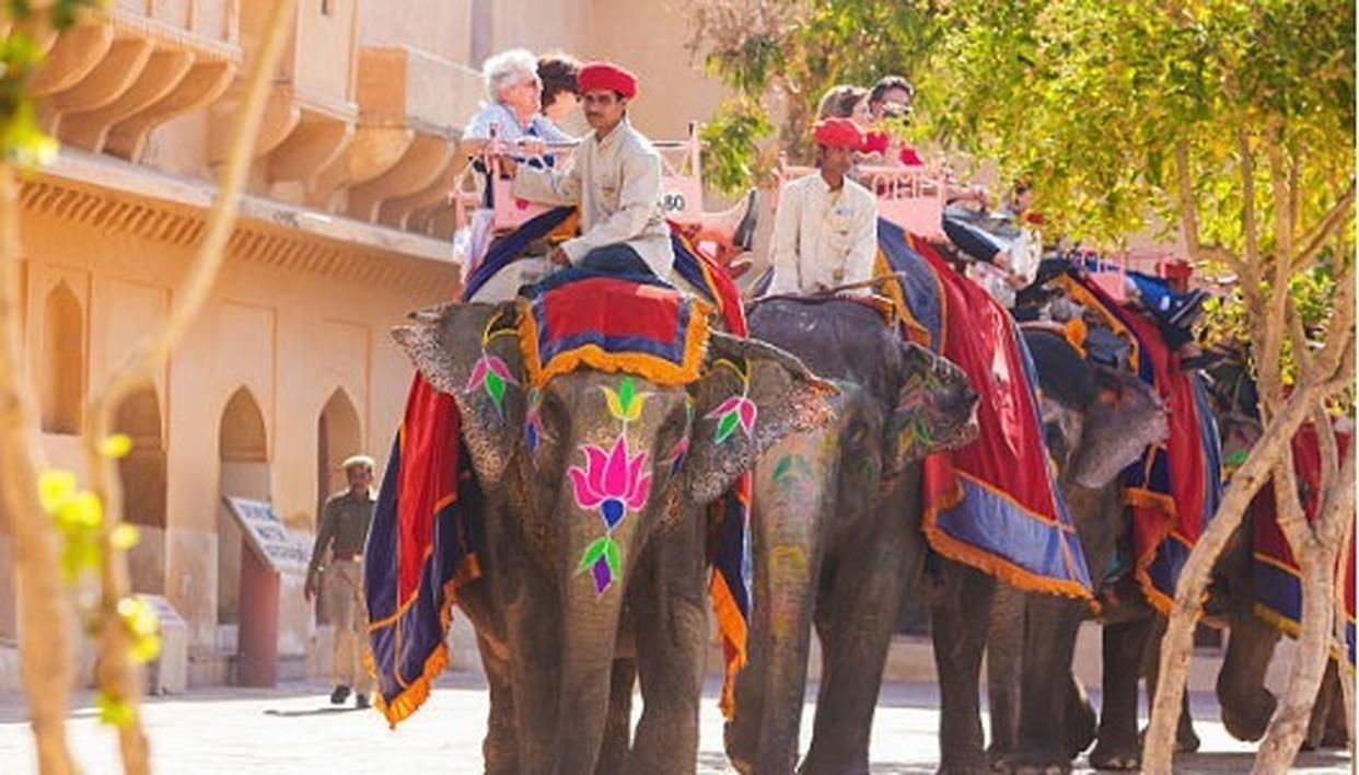 No More Elephant 'Joy Rides' in Rajasthan, Says PETA - Republic World