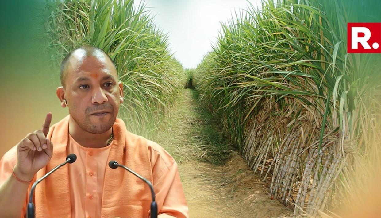 CM योगी की गन्ना किसानों को सलाह, 'गन्ने से होती है डायबिटीज, अन्य फसलों को भी उगाए'