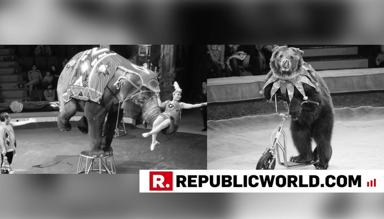 CENTRE PROPOSES BAN ON USE OF ANIMALS IN CIRCUSES