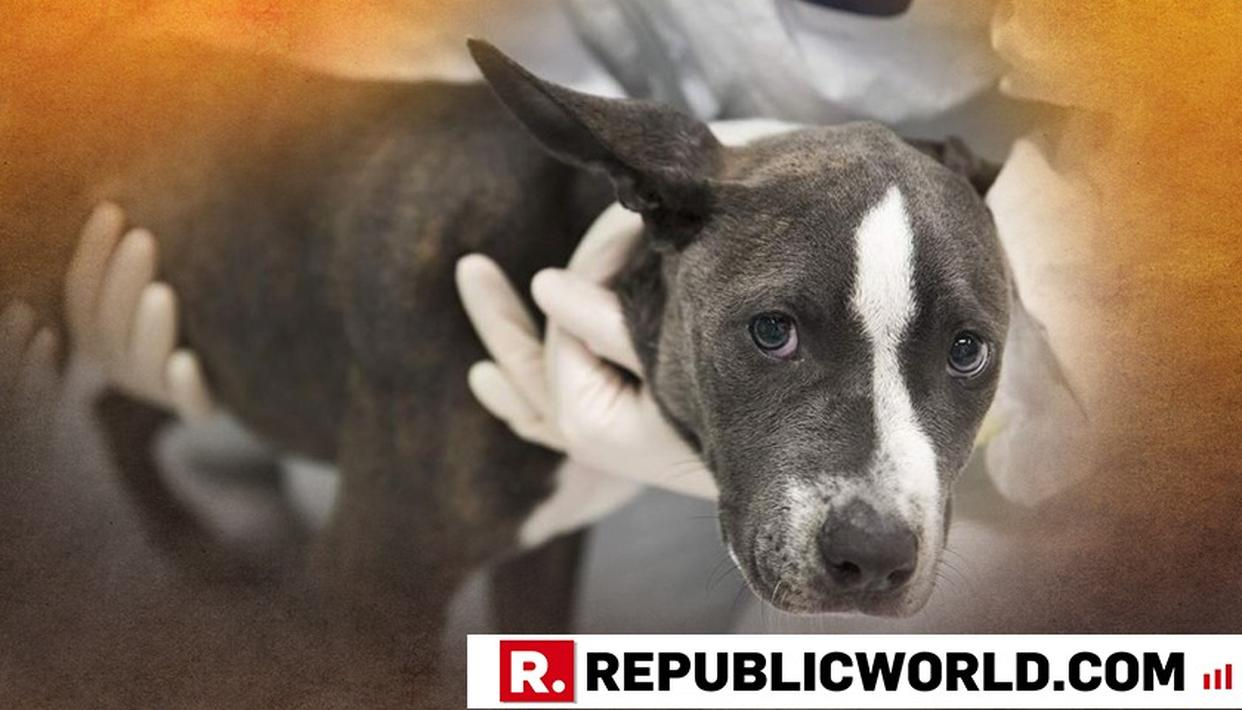 PARVOVIRUS HITS MANIPUR- HERE'S WHAT DOG OWNERS SHOULD DO