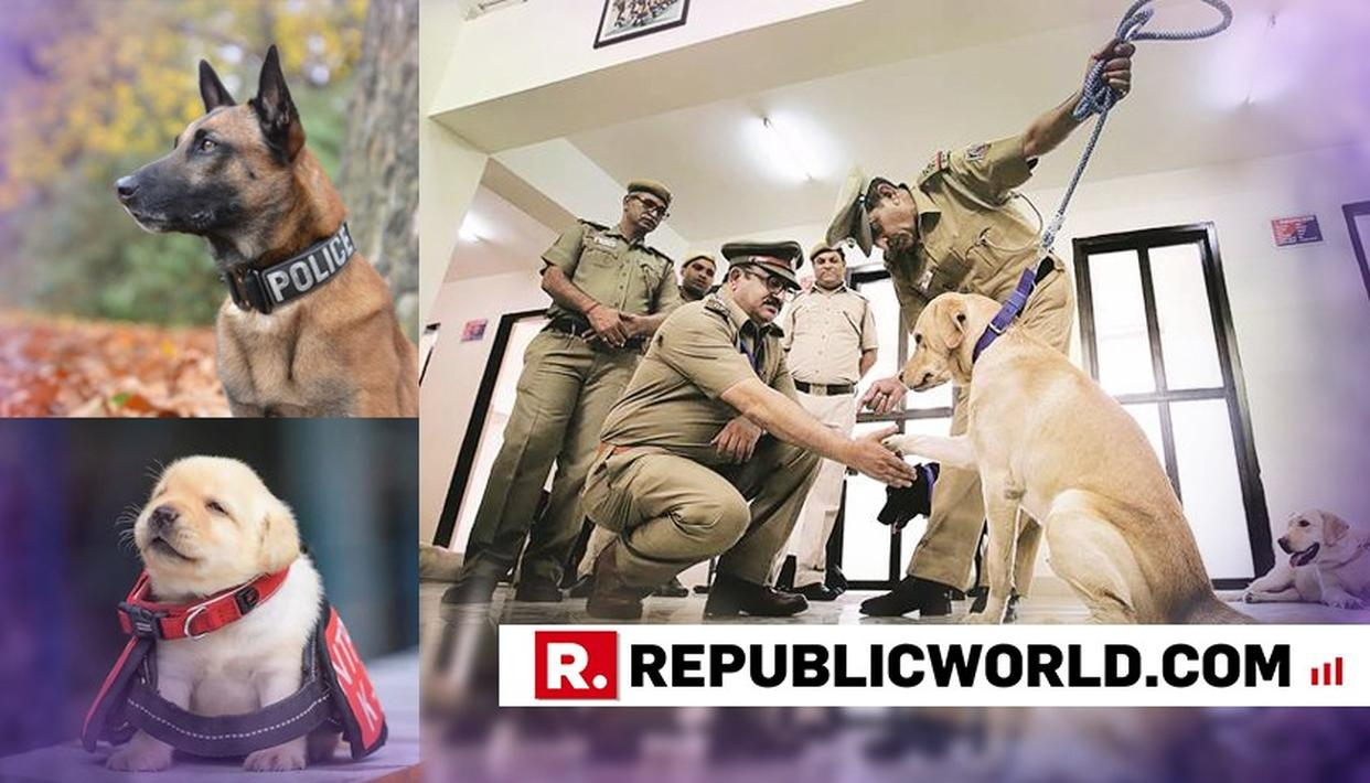 FIVE BELGIAN SHEPHERD DOGS INDUCTED IN MUMBAI POLICE; SIX LABRADOR PUPPIES INDUCTED IN CHANDIGARH POLICE