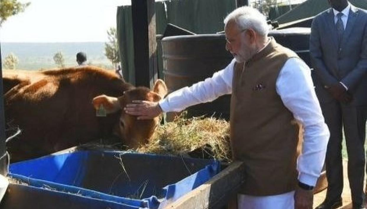 COW IMP PART OF INDIA'S CULTURE, VITAL FOR RURAL ECONOMY: PM