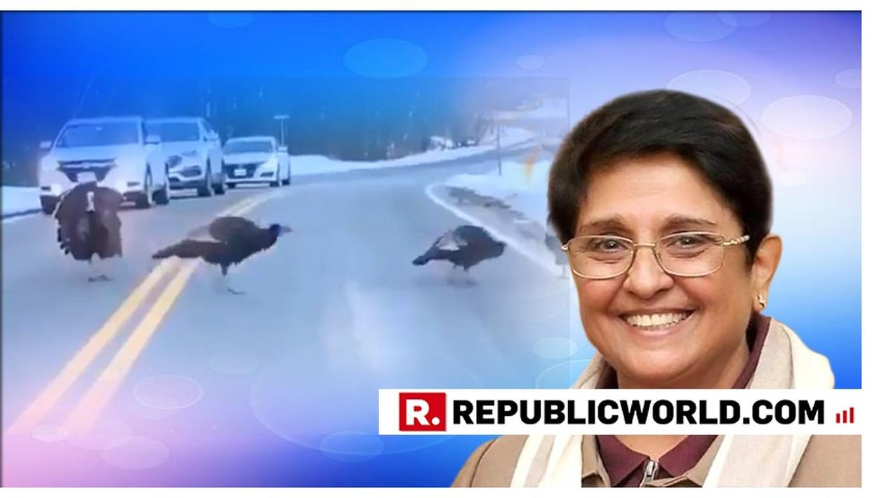 WATCH: KIRAN BEDI IS HUGELY IMPRESSED BY HOW THIS TURKEY PLAYS A TRAFFIC COP AND HALTS CARS SO ITS FLOCK CAN CROSS