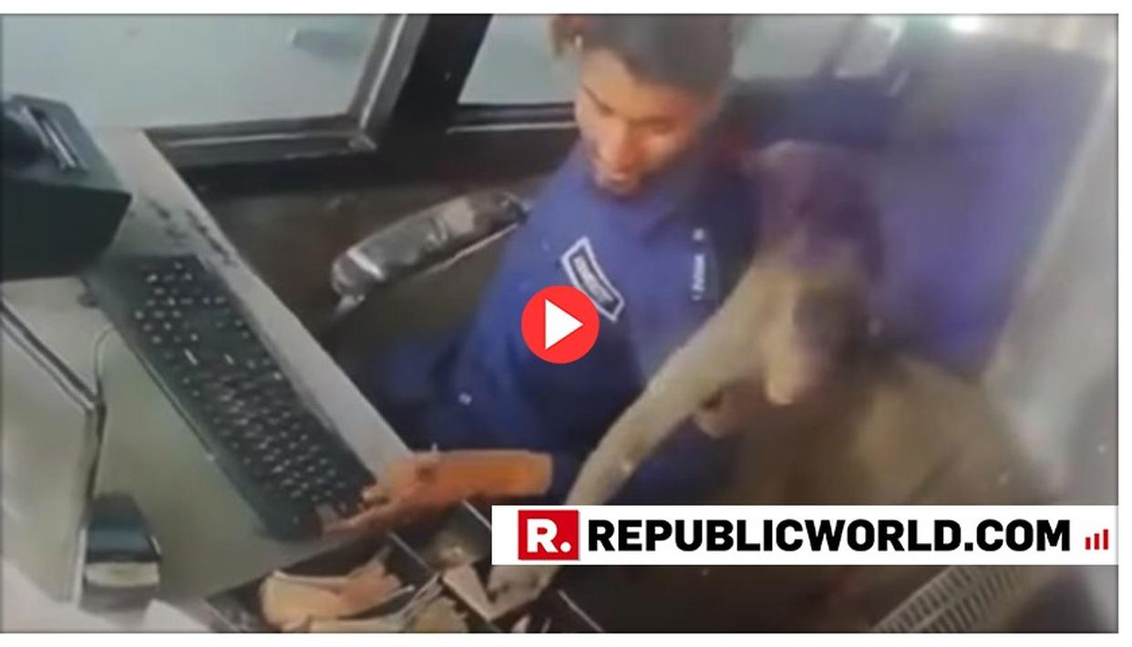 WATCH: MONKEY STOLE RS 5,000 CASH FROM A TOLL PLAZA IN BROAD DAYLIGHT THEN RUNS AWAY. VIDEO GOES VIRAL