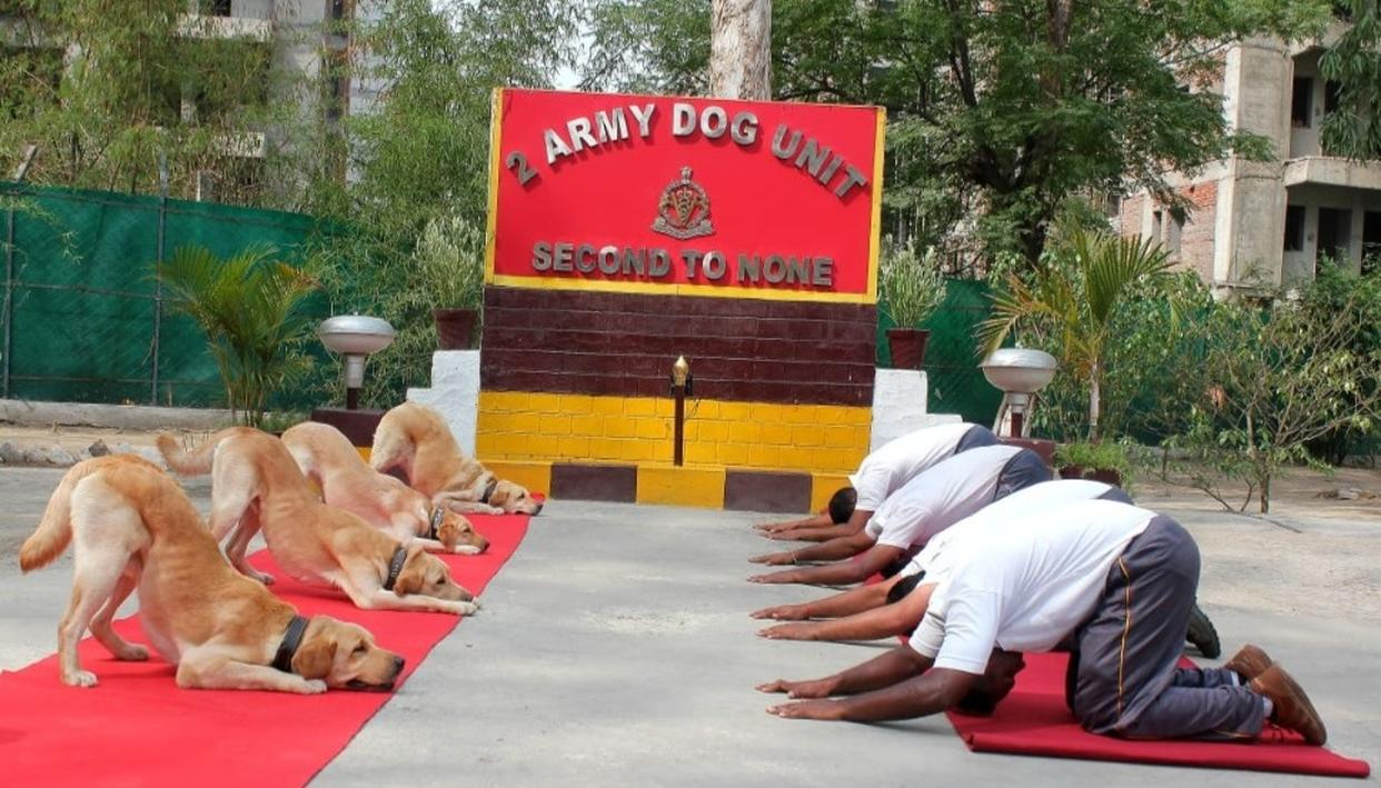 IN PICTURES | INTERNATIONAL YOGA DAY 2019: ARMY DOG UNIT PERFORMS YOGA, ALONG WITH SECURITY FORCES ACROSS THE COUNTRY