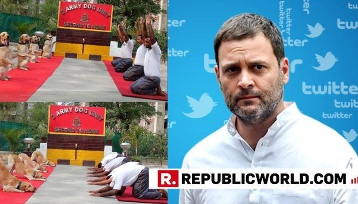 RAHUL GANDHI'S DISTASTEFUL TWEET TAKING A SARCASTIC JIBE AT SECURITY FORCES AND THE DOG ARMY UNIT DRAWS SHARP REACTIONS FROM NETIZENS. READ HERE