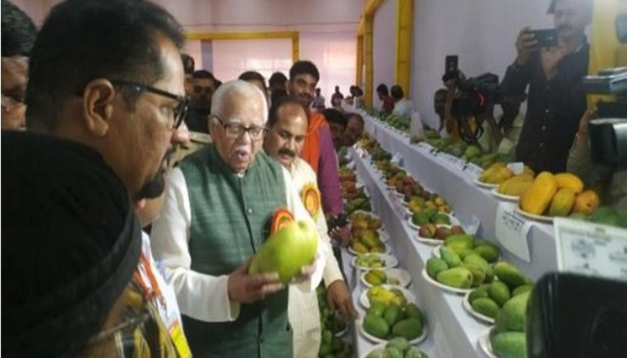 AFTER 'MODI SAREES' AND 'JACKETS', GET READY FOR 'MODI MANGOES'