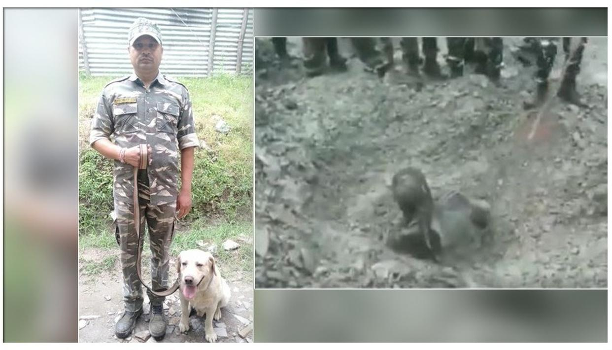 CRPF DOG SAVES LIFE OF A MAN TRAPPED IN A LANDSLIDE IN JAMMU & KASHMIR, WATCH THE RESCUE