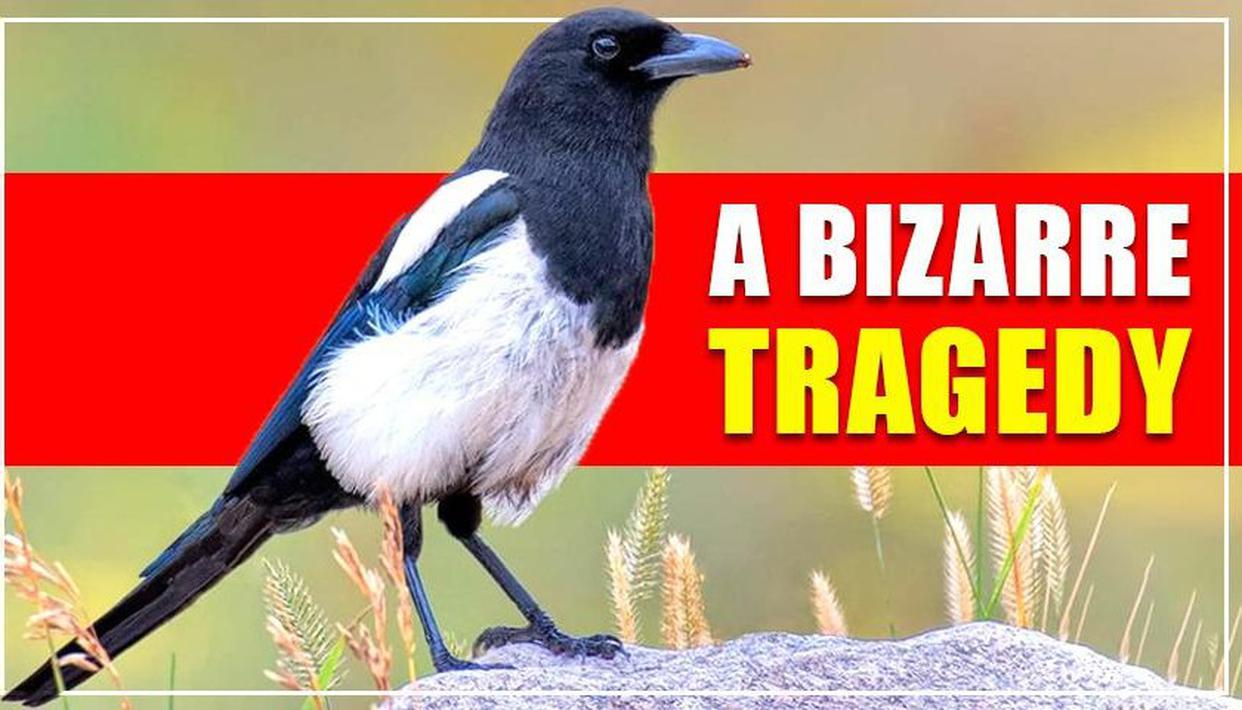 MAN DIES AFTER CRASHING WITH MAGPIE