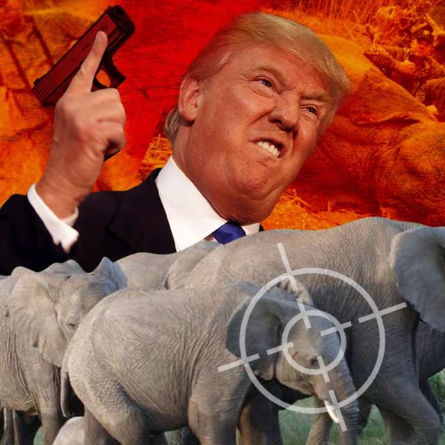 TRUMP LOGIC: HELP ELEPHANTS BY KILLING THEM