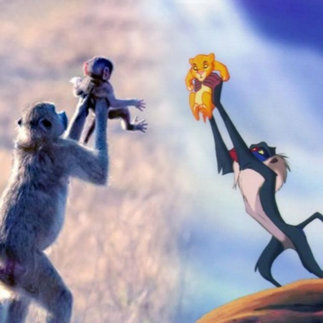 MONKEY RECREATES FAMOUS SCENE FROM 'THE LION KING'