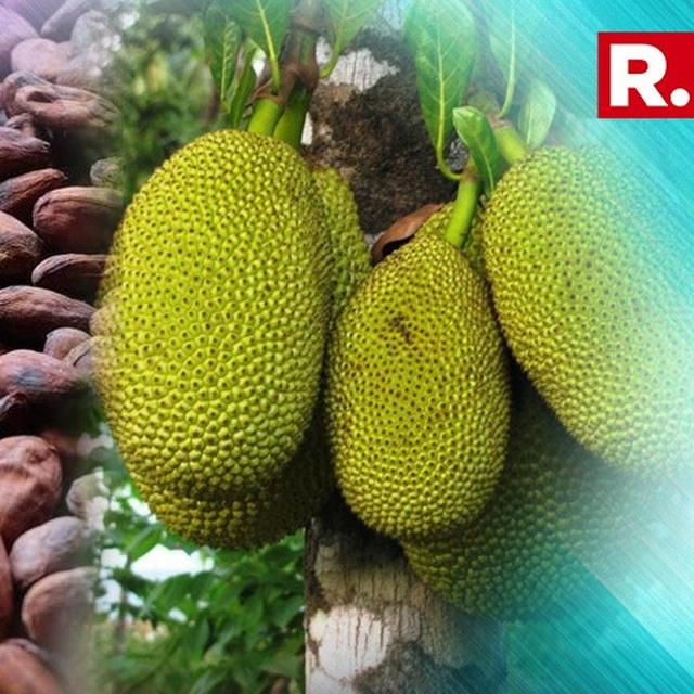 JACKFRUIT SEED CAN BE A SUBSTITUTE TO COCOA: STUDY