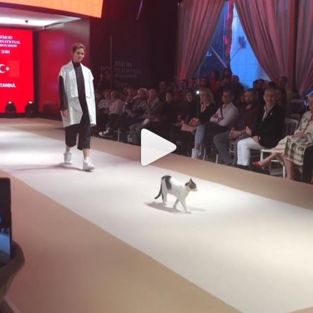 WATCH: CAT WALKING THE CATWALK IN TURKEY