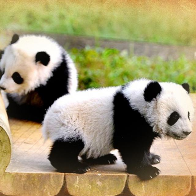 PANDA PARK TO OPEN IN CHINA