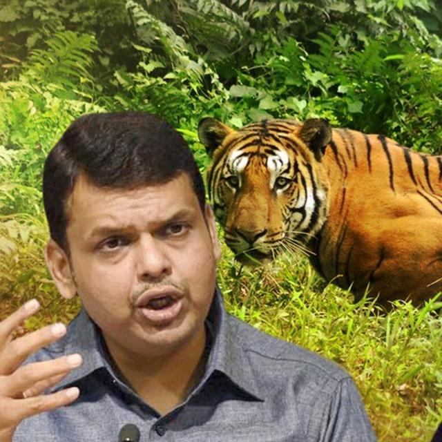 "MAHA CM ANNOUNCES TIGRESS AVNI PROBE; CALLS MANEKA'S WORDS ""HARSH"""