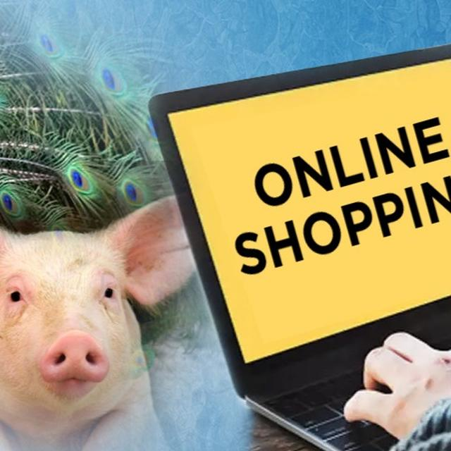 ONLINE SHOPPER WAKES UP TO PIG, PEACOCK AND GIANT SALAMANDER
