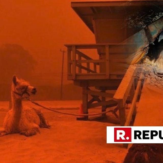 HAUNTING IMAGES OF ANIMALS AFFECTED BY WILDFIRES