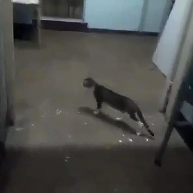 VIDEO OF CAT NIBBLING WOMAN'S BODY IN GOVT HOSPITAL GOES VIRAL