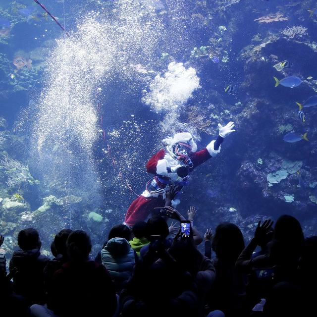 SCUBA DIVING SANTA BRINGS HOLIDAY CHEER TO FISH, MUSEUMGOERS