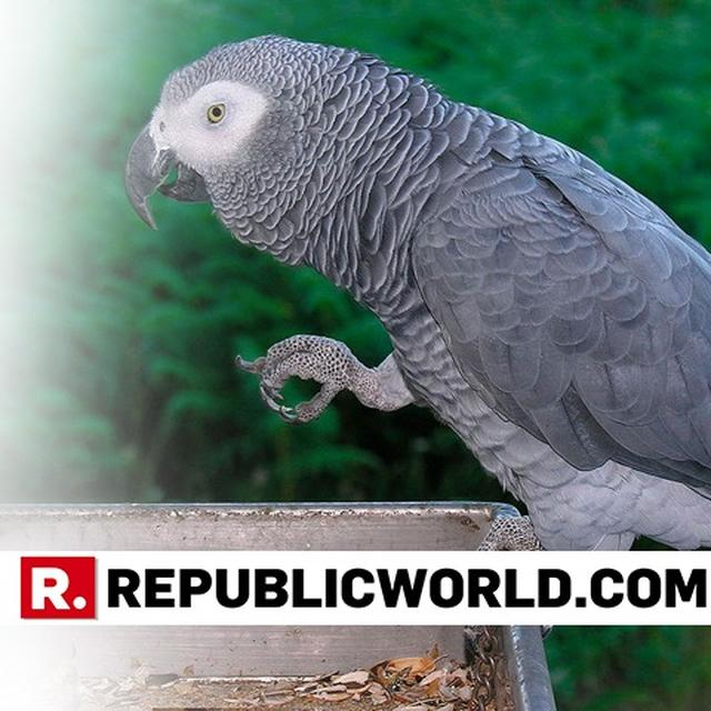 MISCHIEVOUS PARROT BEFRIENDS ALEXA, MIMICS OWNER'S VOICE TO PLACES MULTIPLE ORDERS ON AMAZON