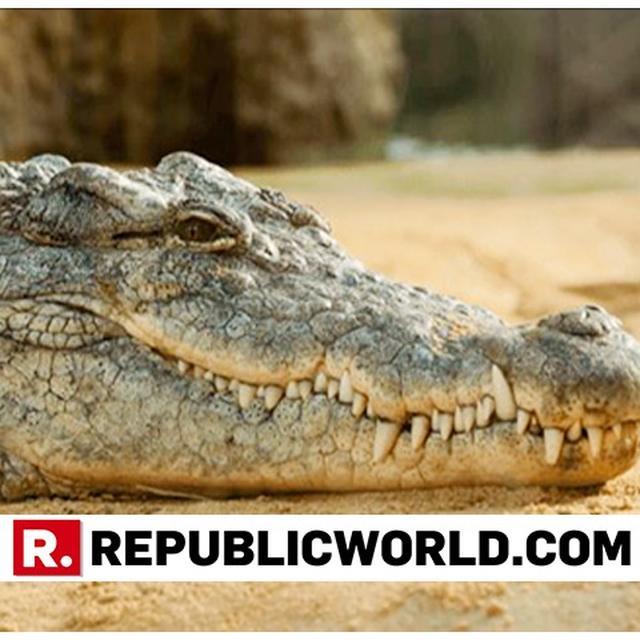 PET CROCODILE MAULS WOMAN TO DEATH IN INDONESIA