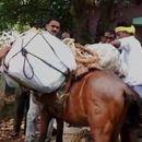 IN PICTURES: WHEN DONKEYS LENT A HELPING HAND IN TAMIL NADU POLL OFFICIALS