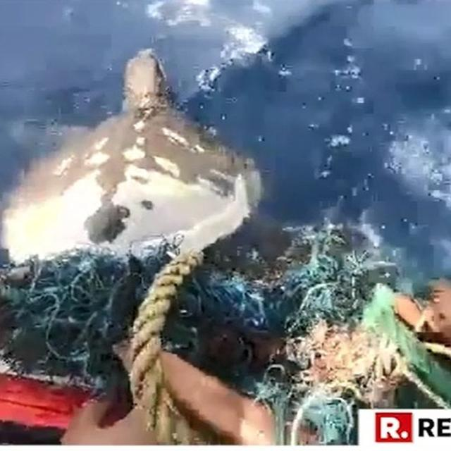 WATCH: HERE'S HOW INDIAN COAST GUARD RESCUED AN ENDANGERED OLIVE RIDLEY TURTLE ALONG THE MARITIME BOUNDARY WITH PAKISTAN