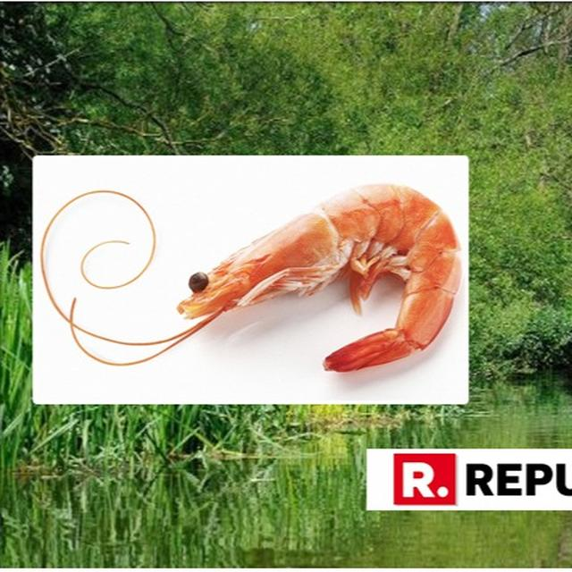 COKED FISH? SHRIMP IN 5 UK RIVERS TEST 100% POSITIVE FOR COCAINE; SCIENTISTS CLUELESS ABOUT THE SOURCE