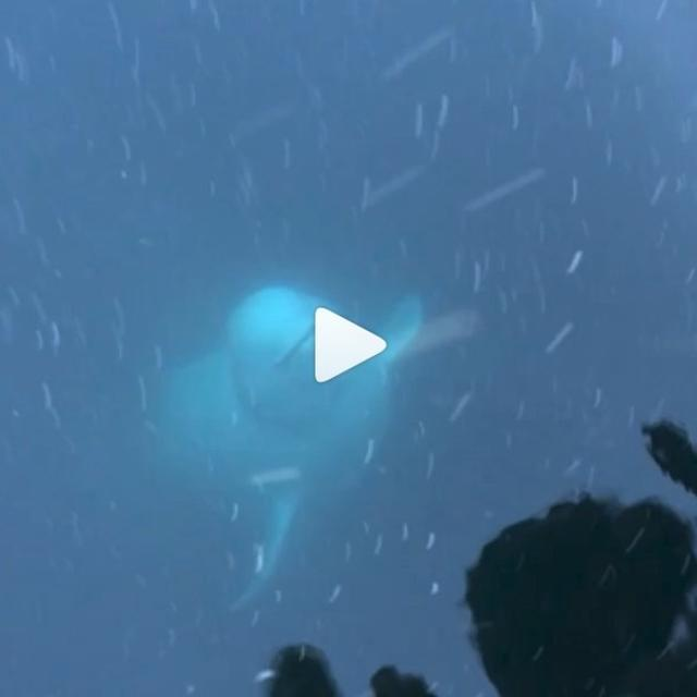 MUST WATCH: IN WONDERFUL VIDEO, BELUGA WHALE FISHES OUT WOMAN'S PHONE AND RETURNS IT AFTER SHE DROPPED IT INTO THE SEA