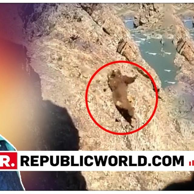 'WHY INVADE THEIR HABITAT IN THE FIRST PLACE?,' ASKS MEHBOOBA MUFTI AFTER SHARING VIDEO OF BEAR TUMBLING DOWN A CLIFF AFTER PEOPLE PELT STONES AT IT