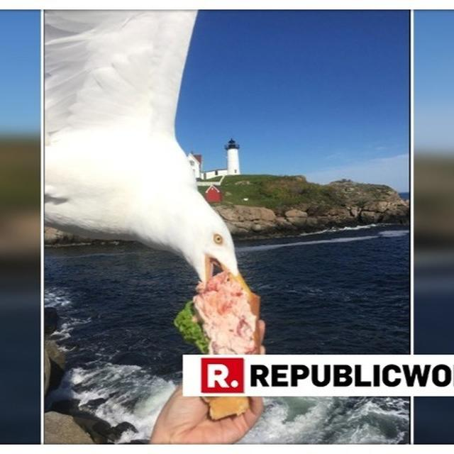 SEAGULL PHOTOBOMBS UNIVERSITY PROFESSOR'S CLICK WHILE TRYING TO STEAL HER LOBSTER ROLL, VIRAL IMAGE BREAKS THE INTERNET