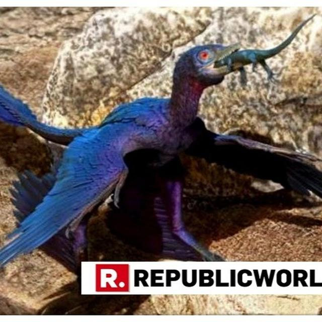 INDRASAURAS: MEET THE 'MICRORAPTOR' NAMED AFTER LORD INDRA, FOUND WITH THE REMAINS OF A NEARLY COMPLETE LIZARD IN ITS STOMACH