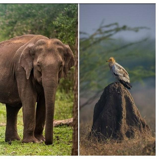 'JUMBO'ANIL KUMBLE SNAPS BREATHTAKING EGYPTIAN VULTURE, NETIZENS POINT OUT THE TEAM INDIA 'ELEPHANT IN THE ROOM'