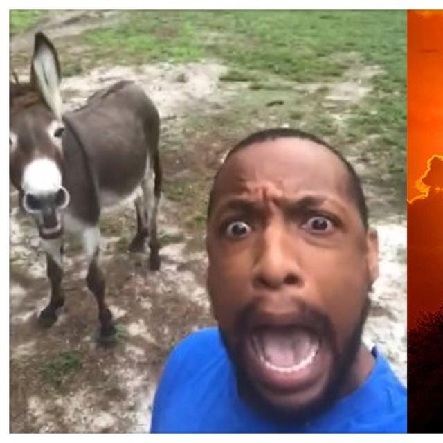 CIRCLE OF LIFE: US MAN'S VIDEO WITH DONKEY SINGING THE 'LION KING' SONG A BIG HIT, NETIZENS WOWED BY THE UNIQUE VERSION