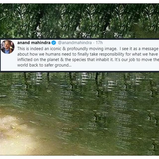 ANAND MAHINDRAMOVED BY POIGNANT IMAGE OF HUMANS AND ANIMALS BATTLING FLOODS, MAKES APPEAL