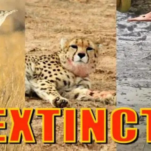 RESEARCH: 3 ANIMAL SPECIES EXTINCT
